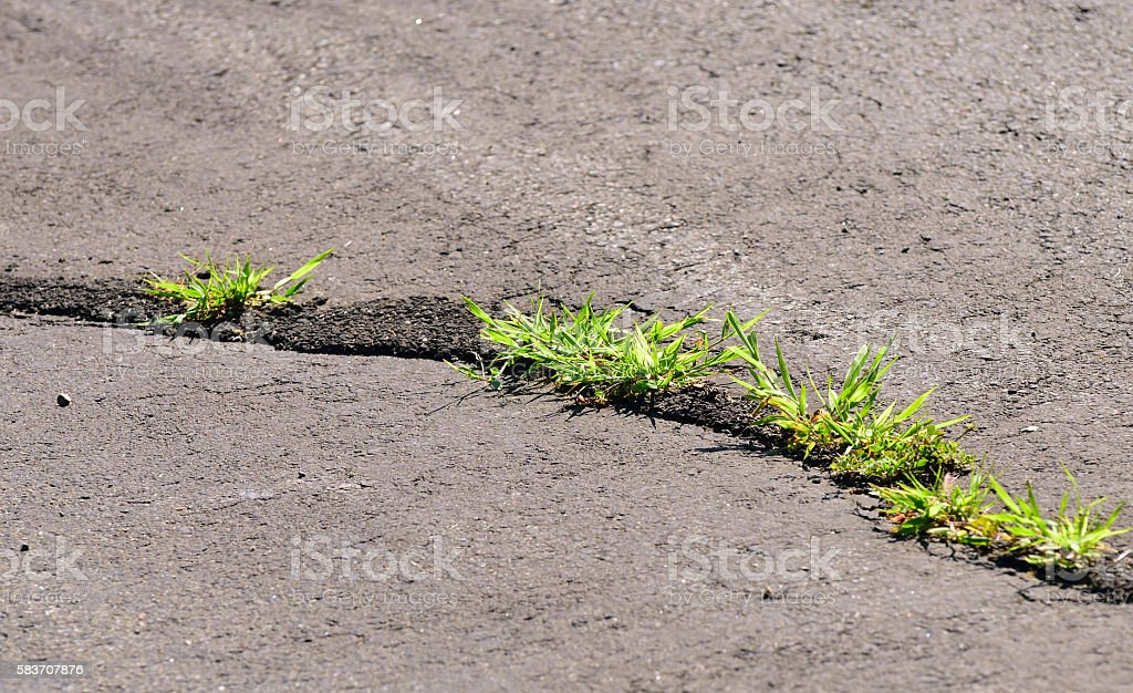 Grass pushing its way through cement stock photo