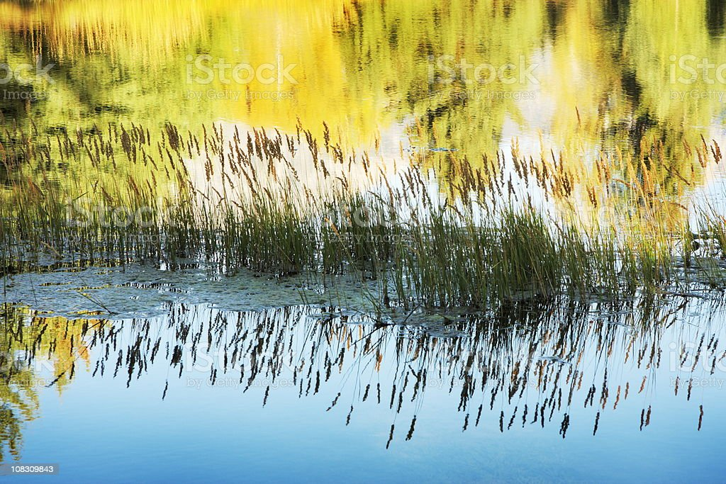 Grass Reflection Wilderness River Sunrise royalty-free stock photo