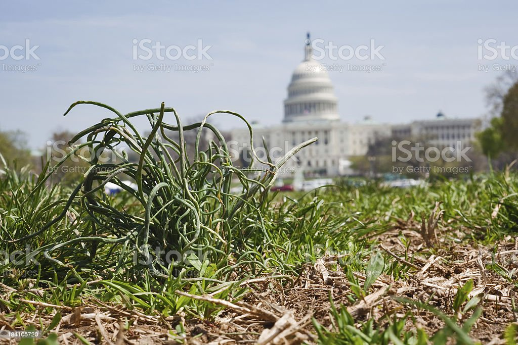 Grass root politics stock photo