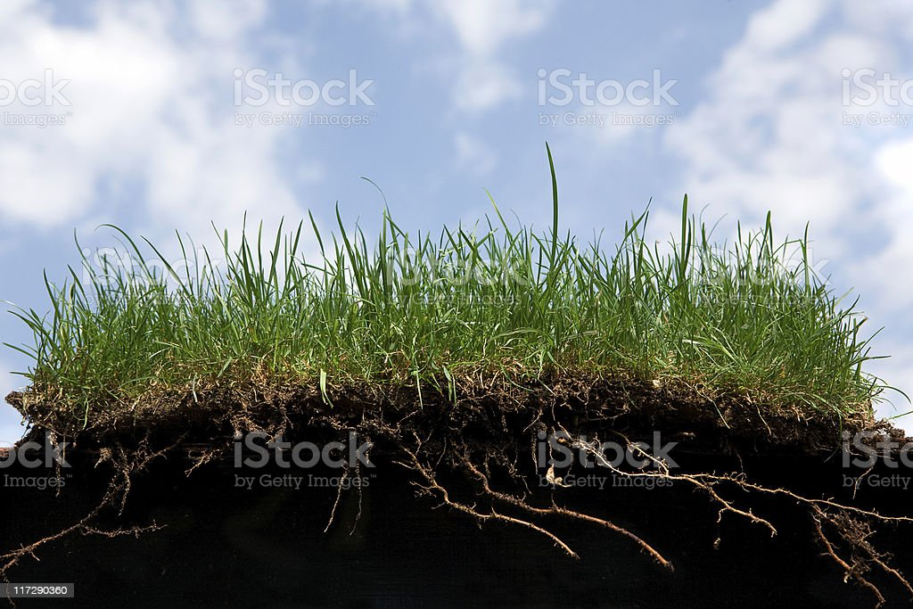 grass roots royalty-free stock photo