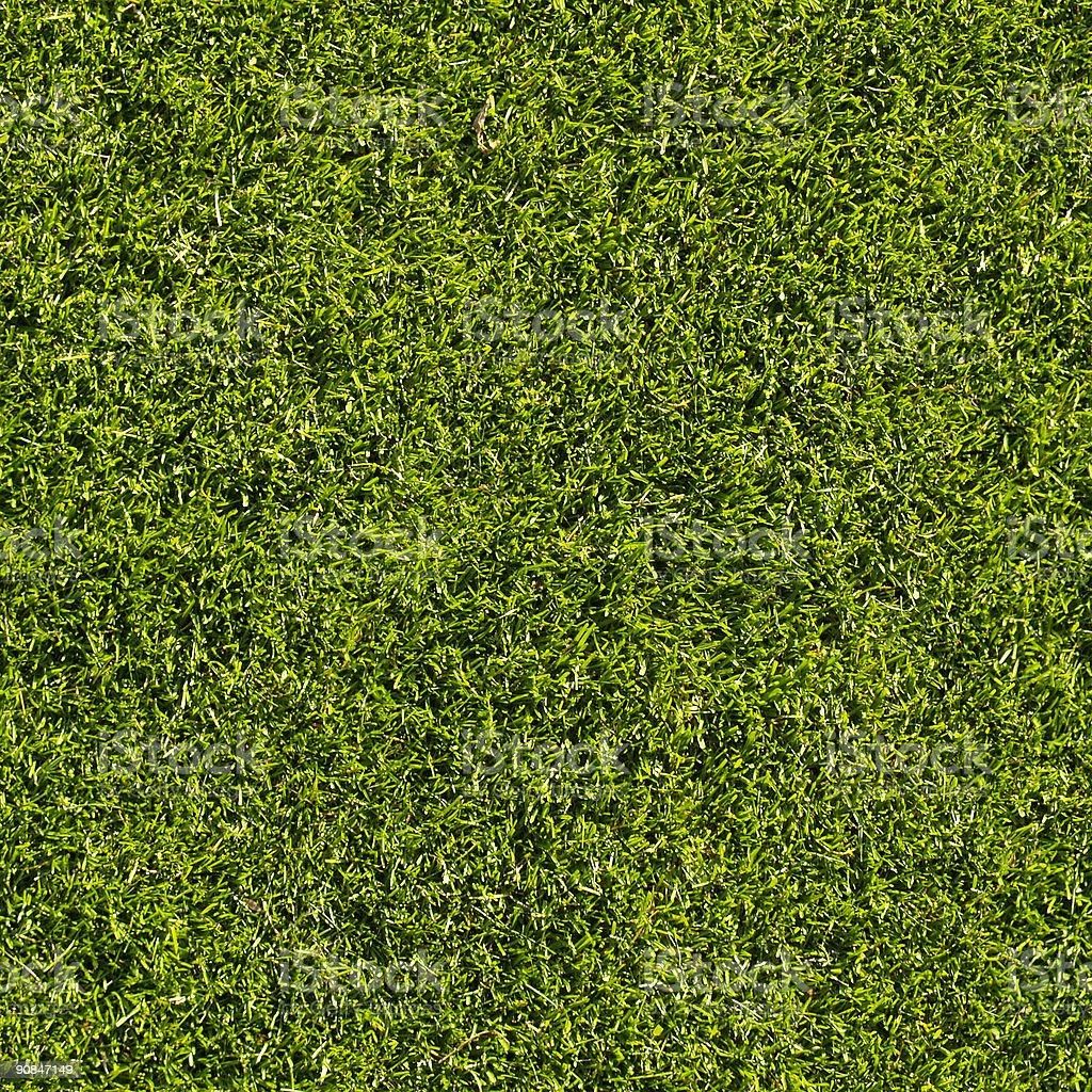 Grass, seamless stock photo