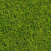 Grass, seamless