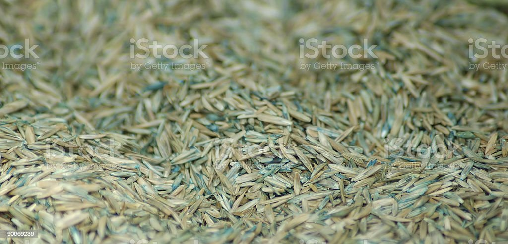 Grass Seed - Growth stock photo