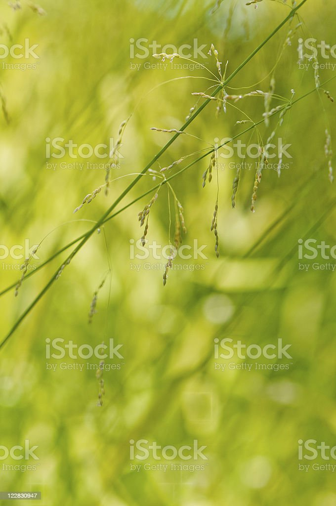 Grass Seeds Background royalty-free stock photo