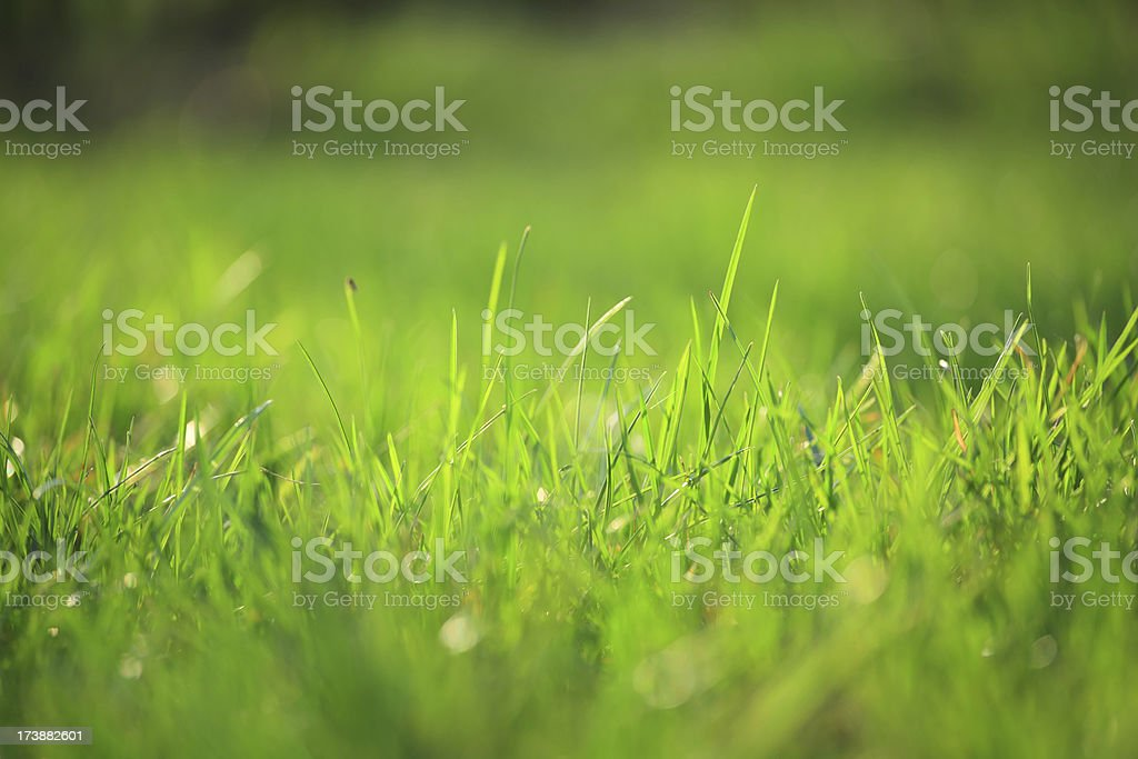 Grass - selective focus royalty-free stock photo
