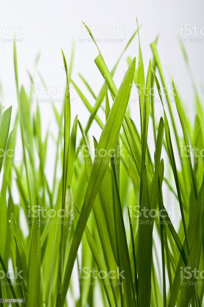 Grass Series royalty-free stock photo