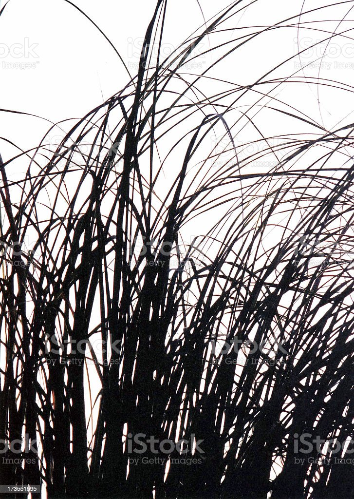 Grass Silhouette royalty-free stock photo