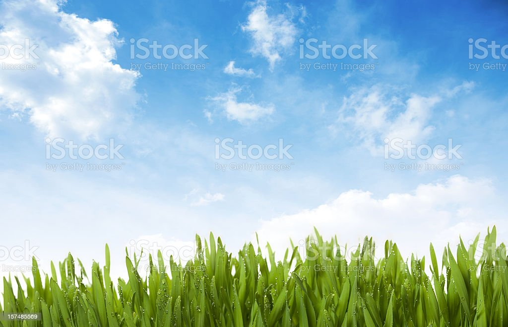 Grass, Sky , Drops royalty-free stock photo
