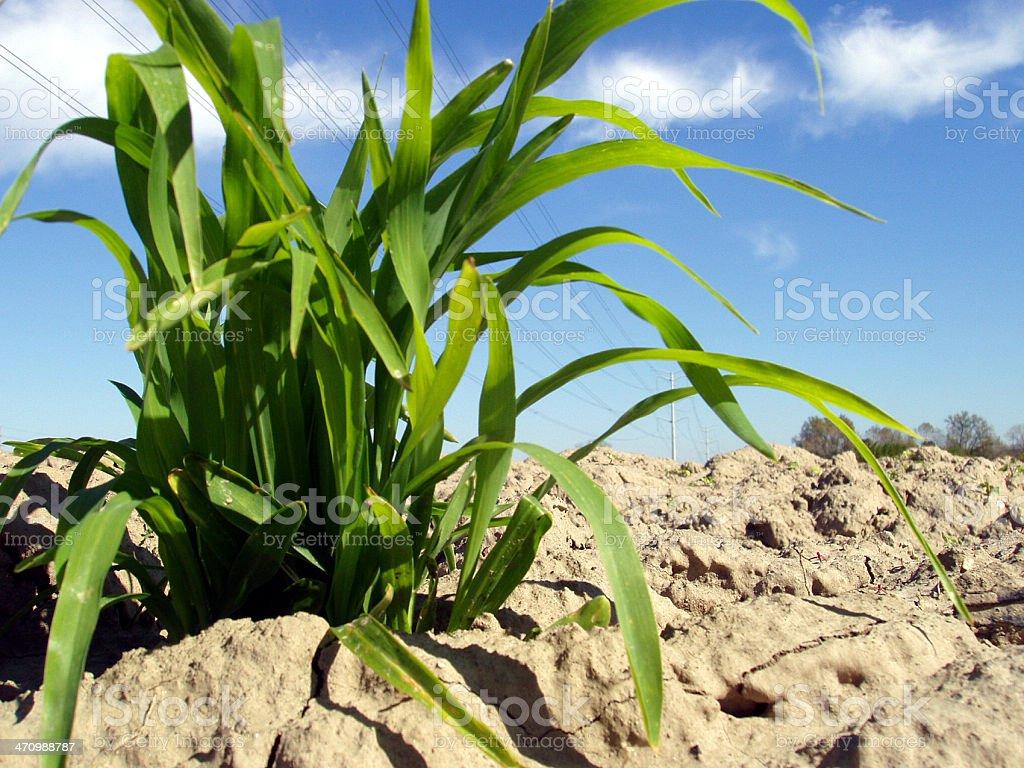 Grass & Sky royalty-free stock photo