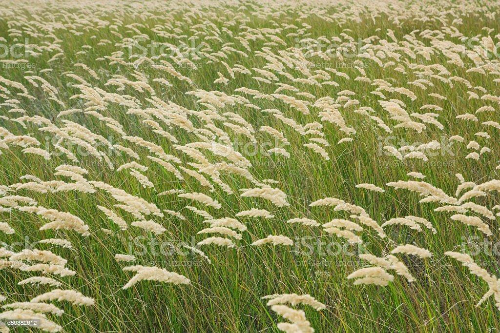 Grass steppe stock photo
