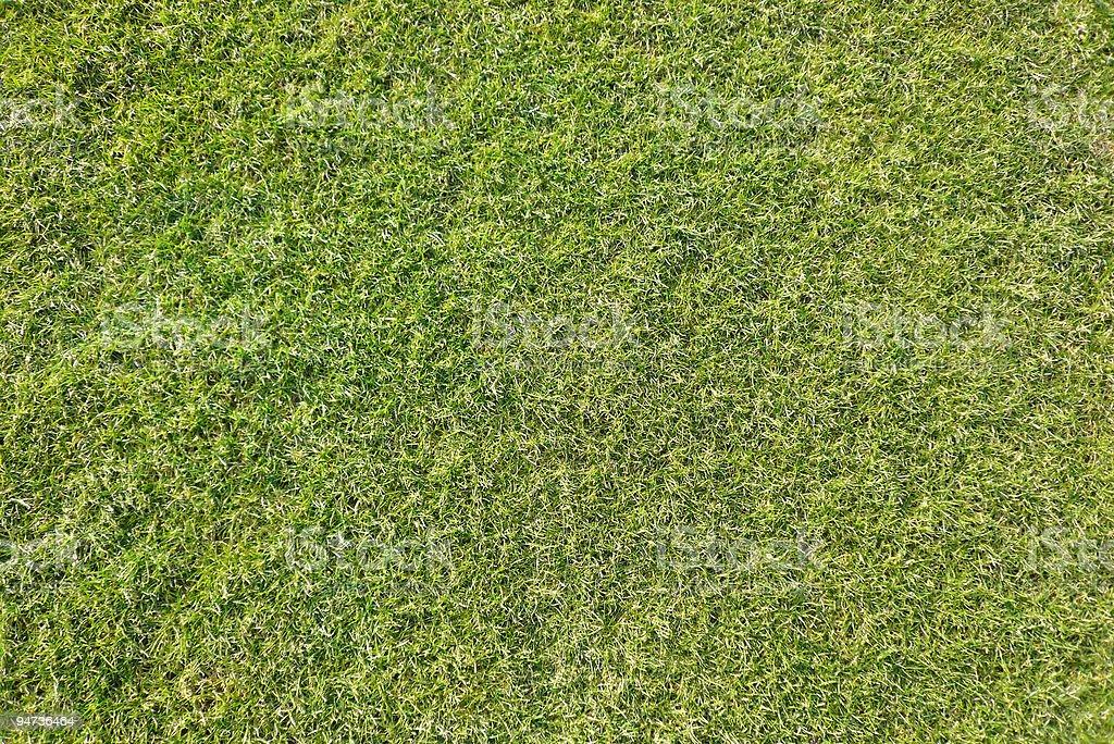 Grass Texture royalty-free stock photo