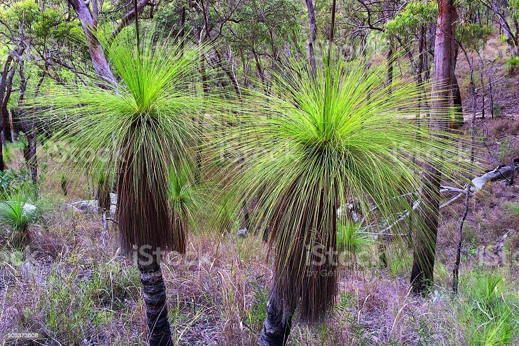 Grass Trees stock photo