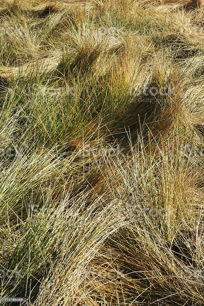 Grass Tufts Wild Animal Bed stock photo