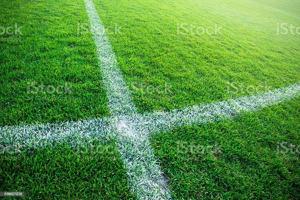 Grass turf on a sports field stock photo