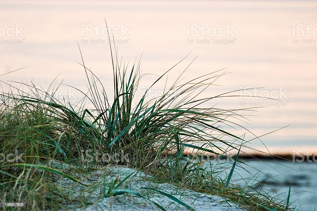 Grass turf stock photo