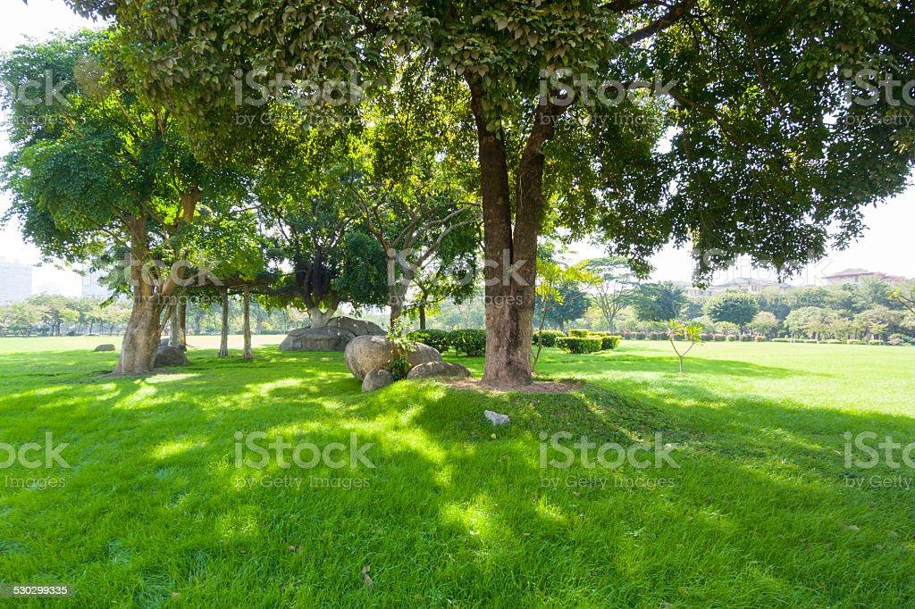 Grass under shadow stock photo