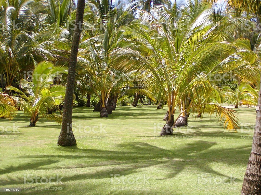 Grass under the palms royalty-free stock photo