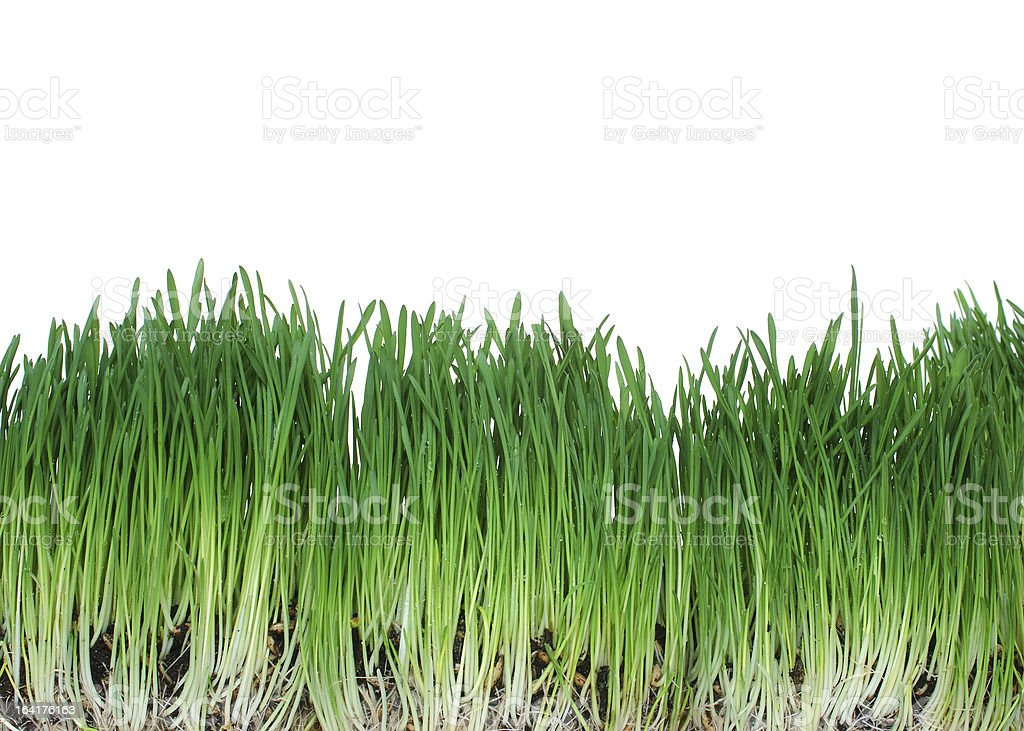grass [with cliping path] royalty-free stock photo