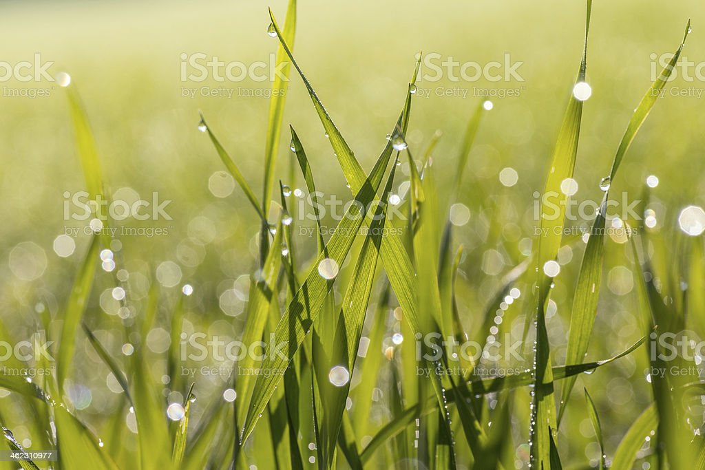 Grass with narrow depth of field stock photo