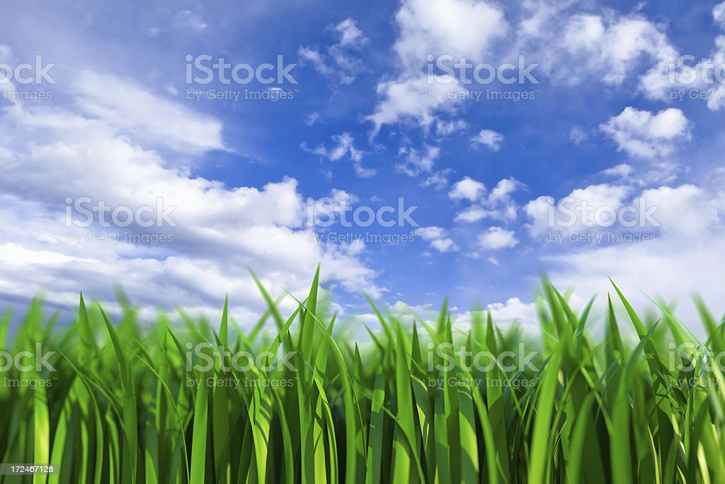 grass with sky stock photo
