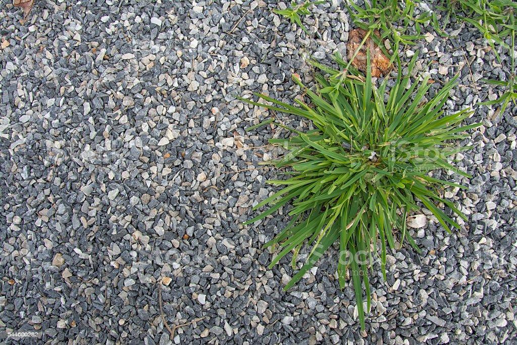 grass with stone, rock, Pebble stones , background stock photo