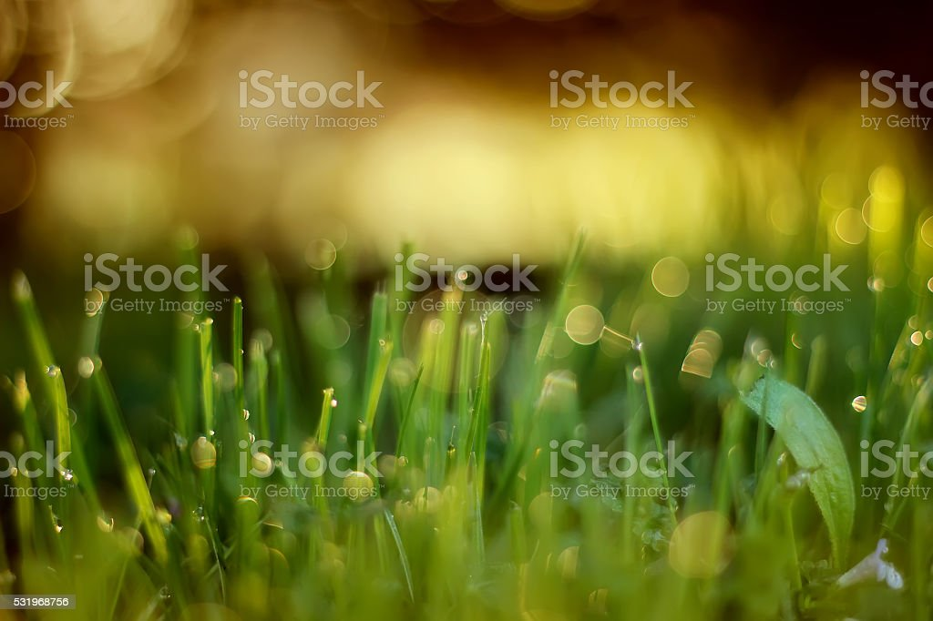 grass with sunlight in background royalty-free stock photo