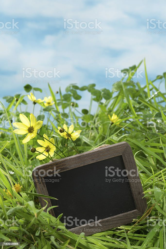 Grass with text board stock photo