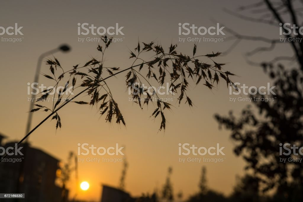 Grass with water droplets during sunrise. stock photo