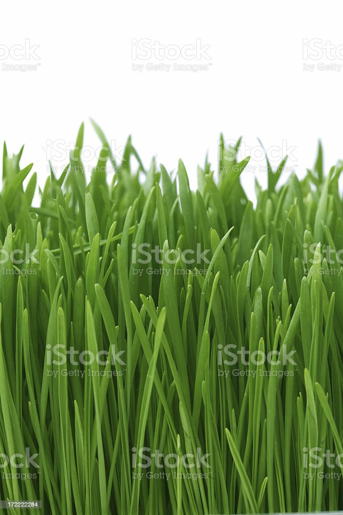 Grass XLarge royalty-free stock photo