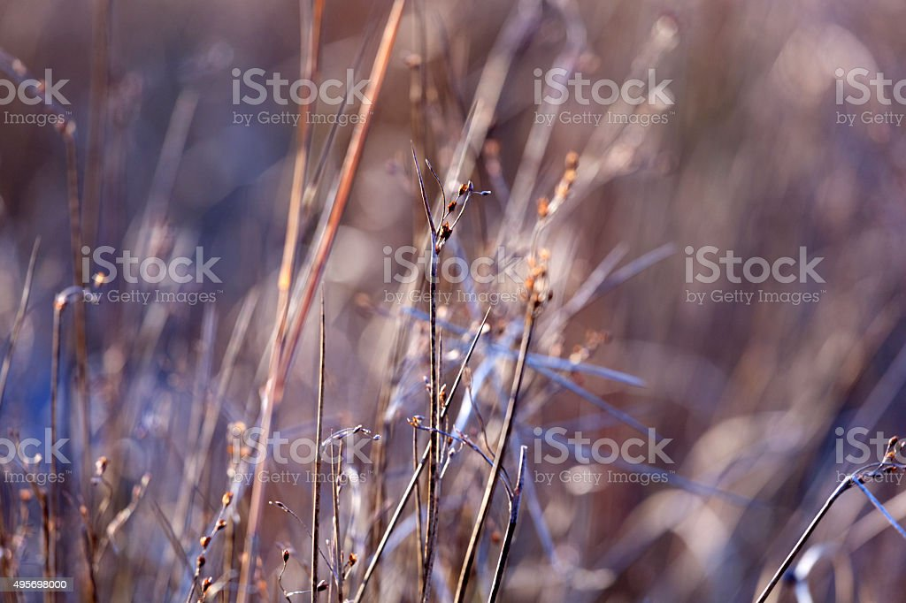 Grasses abstract stock photo