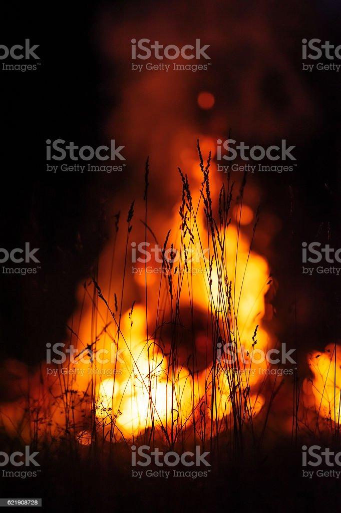 Grasses against burning fire stock photo