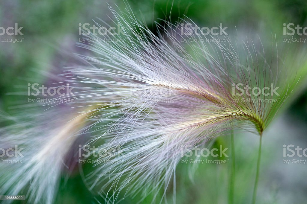 Grasses background stock photo