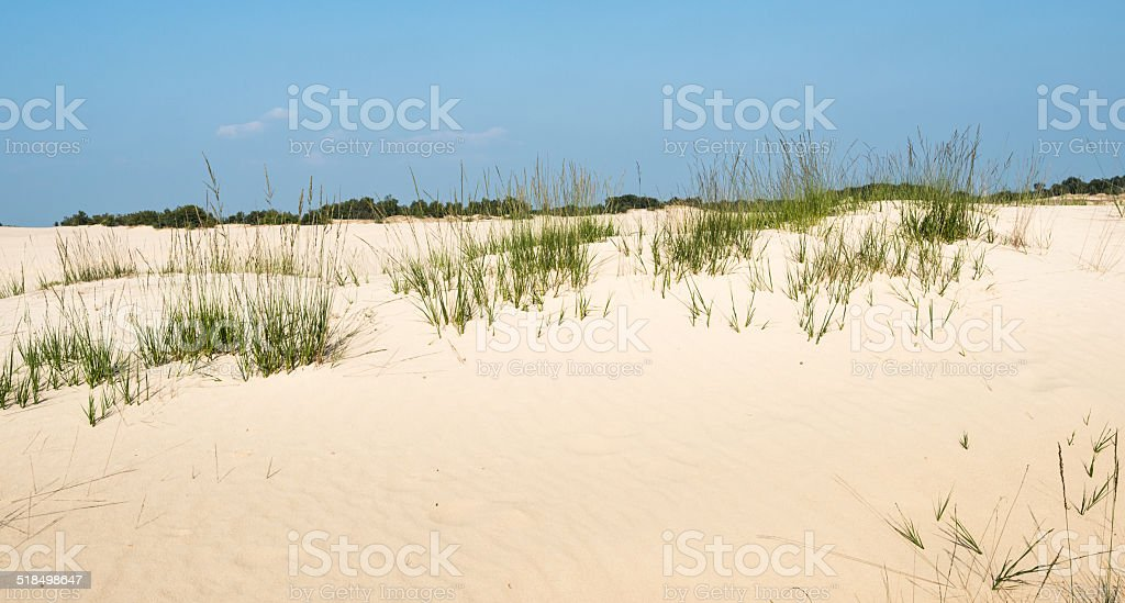 Grasses growing in a dune landscape in summertime stock photo