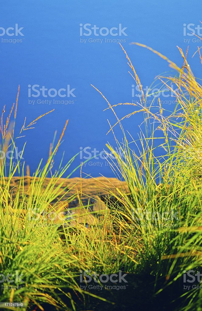 Grasses lit by the evening sun stock photo