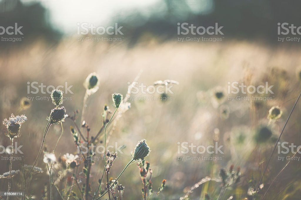 Grasses on summer meadow stock photo