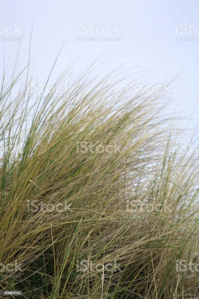Grasses royalty-free stock photo