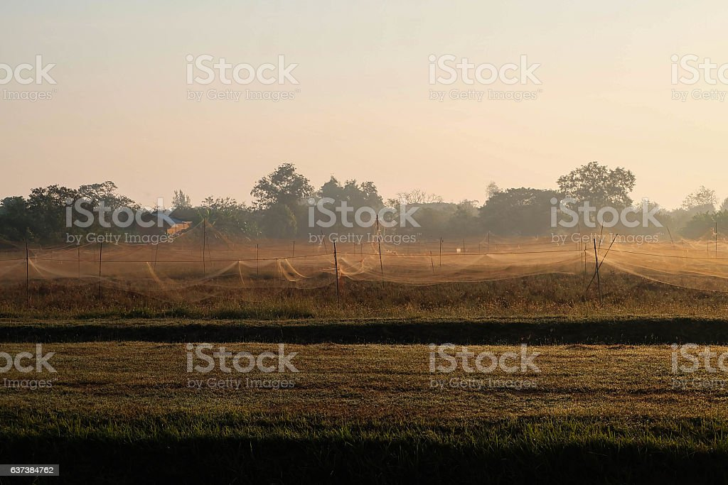 Grassfield n the morning stock photo