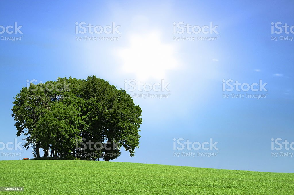 grassfield with a bunch of trees and bright sunlight royalty-free stock photo