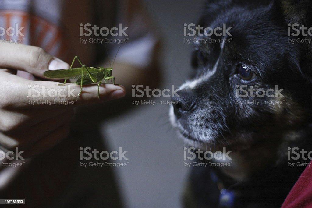 Grasshopper and dog royalty-free stock photo