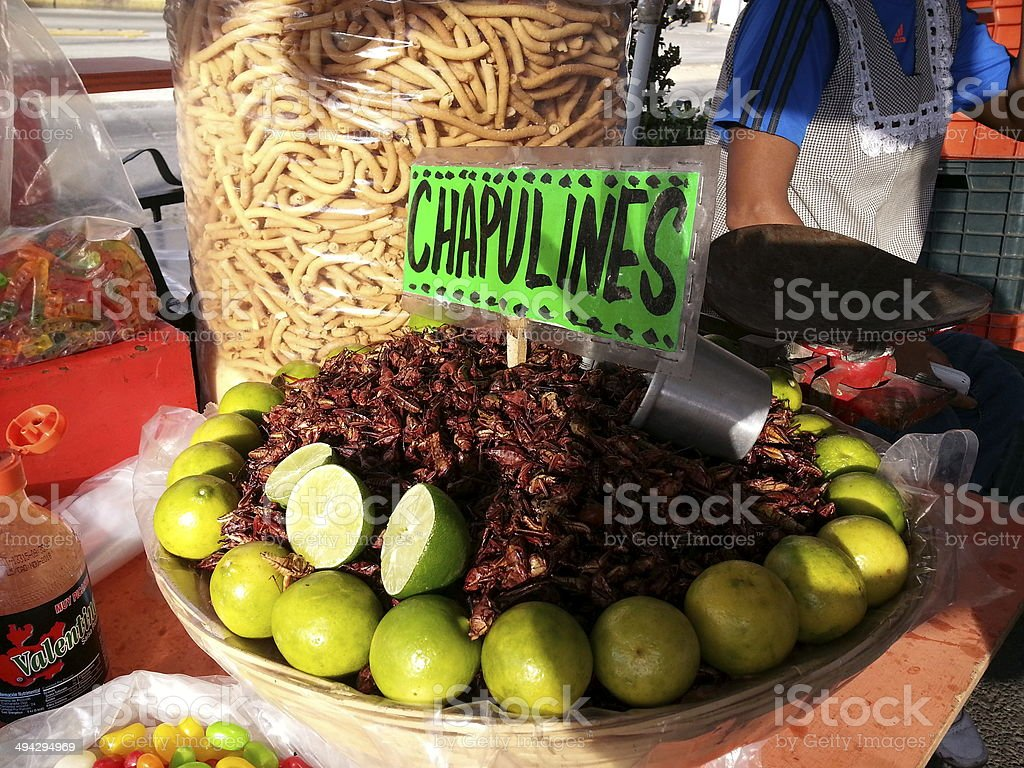 grasshopper as food stock photo