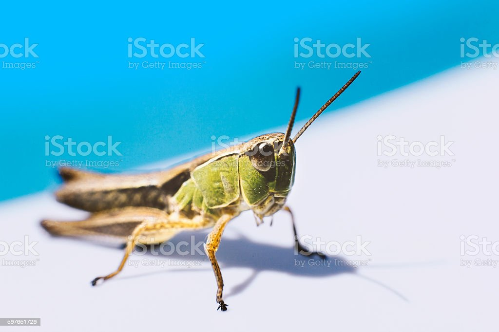 Grasshopper catching sun in Summer near Swimming Poll stock photo