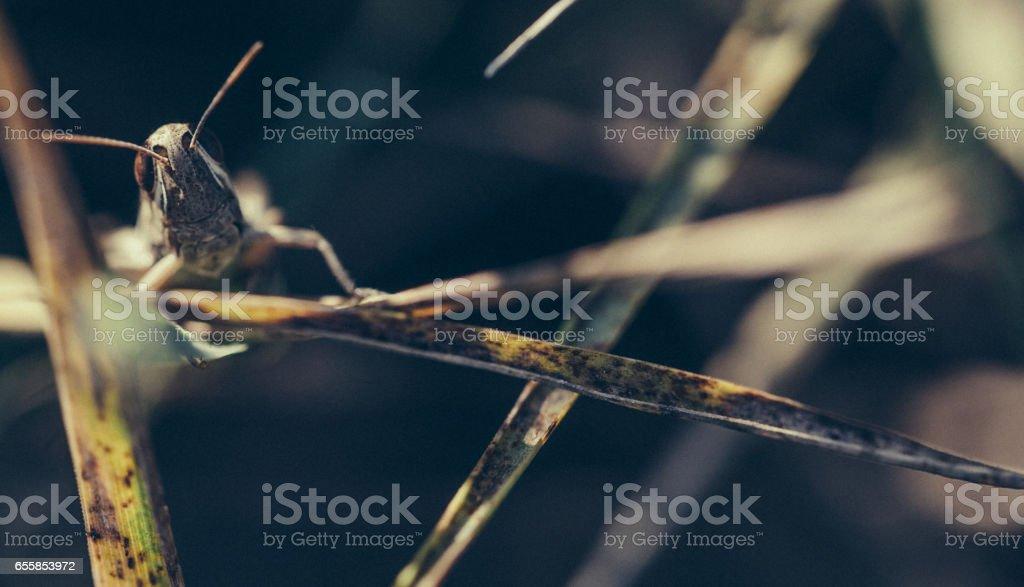 Grasshopper close up in nature stock photo
