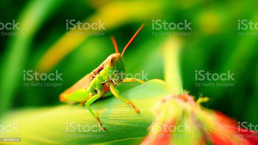 grasshopper fixed a glare on me stock photo