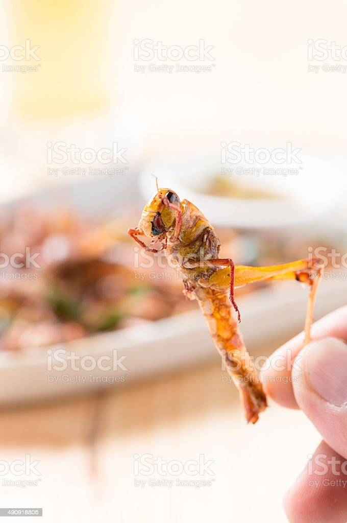 Grasshopper fried in hand stock photo