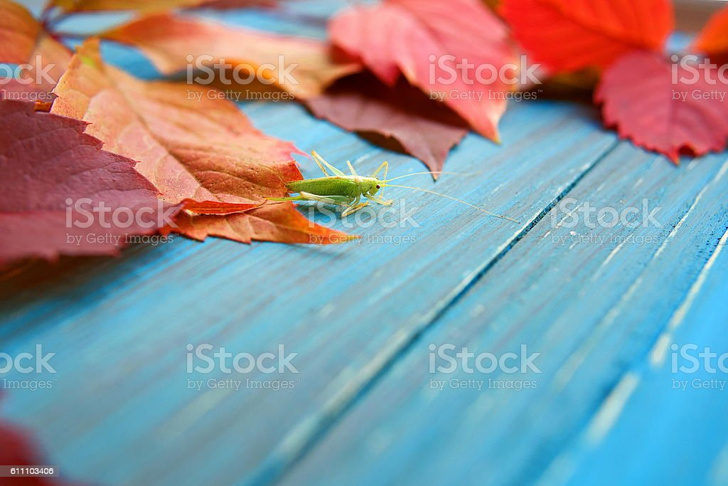 Grasshopper in colorful autumn leaves stock photo