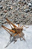 Grasshopper in open air
