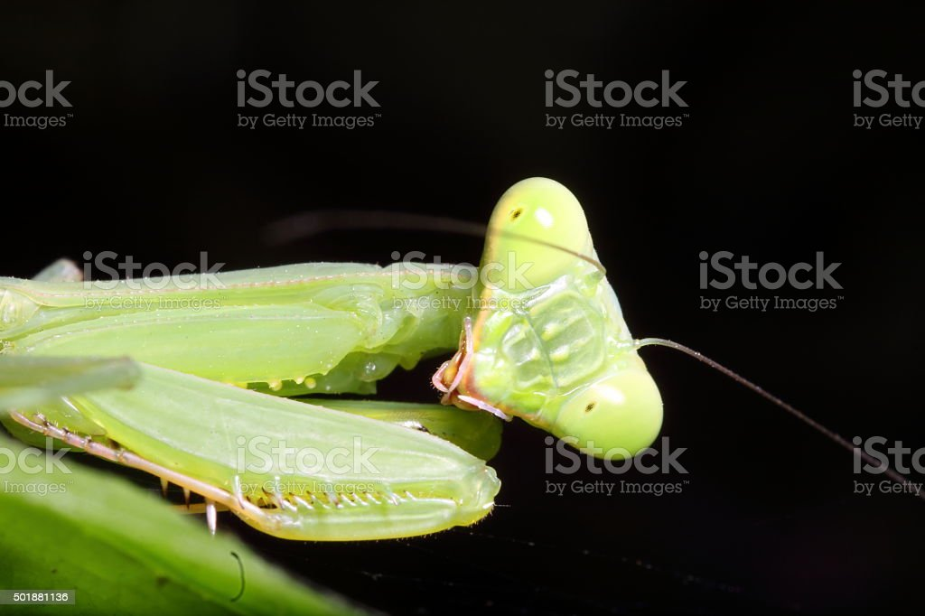 grasshopper in the green garden stock photo