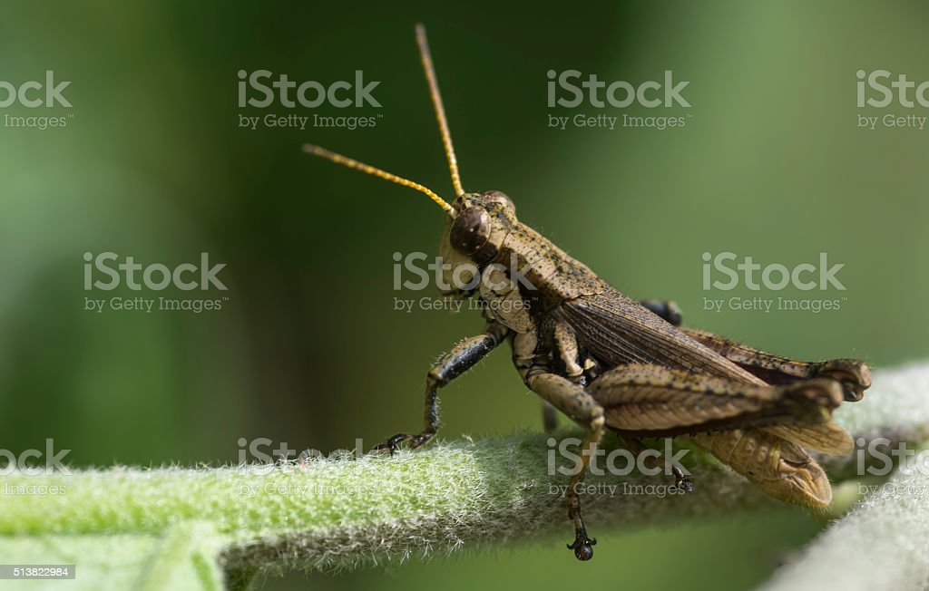Grasshopper looking away stock photo