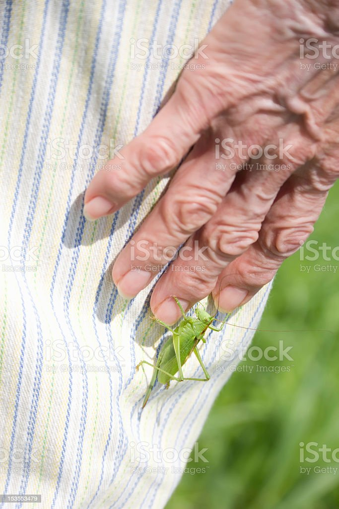 grasshopper on a female hand royalty-free stock photo