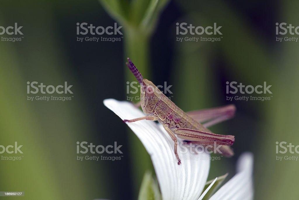 Grasshopper on a flower stock photo